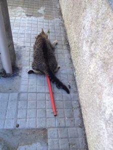 gatto impalato