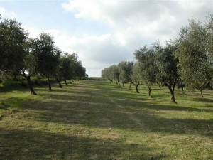 agricoltura Taranto